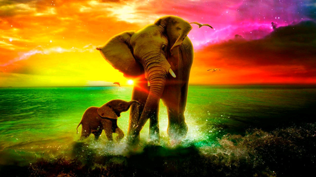 Strong Wallpapers Quotes Elephant Wallpapers 1280x720 Volganga