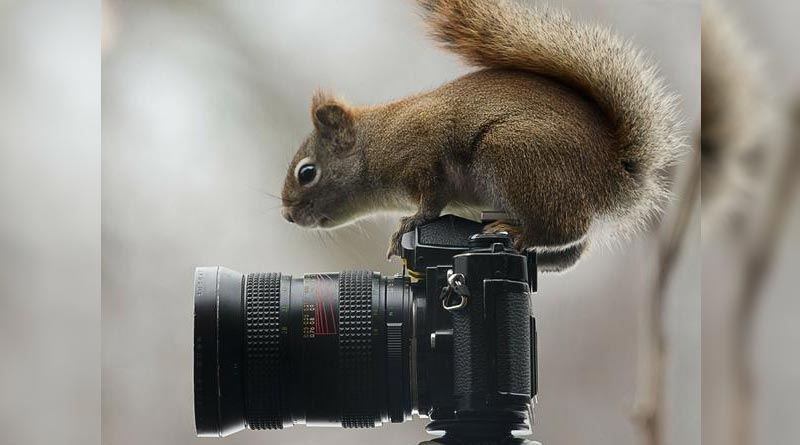 Koala Quotes Wallpapers Wild Photographers 20 Curious Animals With Cameras Page