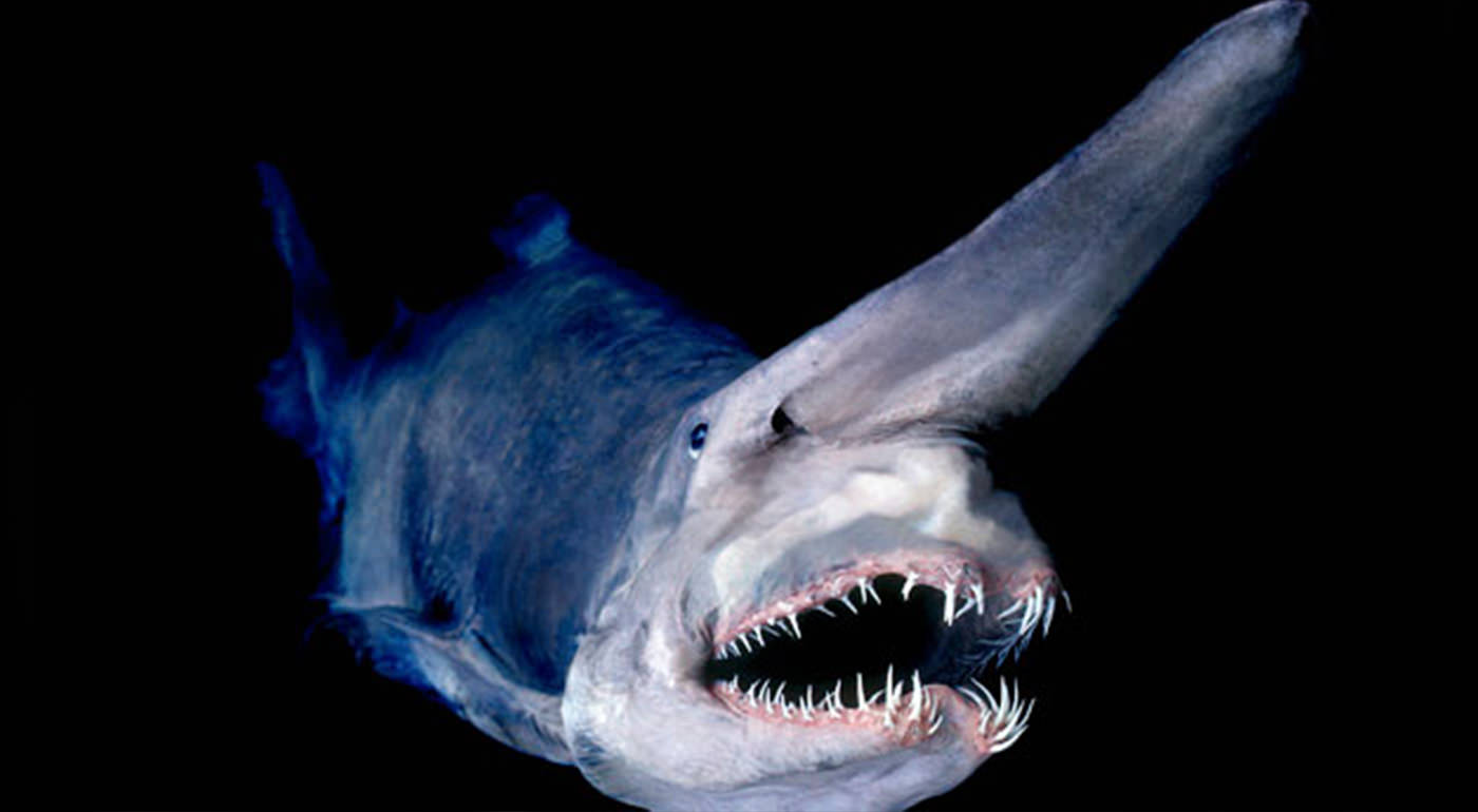 Strange Deep Sea Creatures Video Shocking Photos Of Some Of The World 39s Most Bizarre Deep