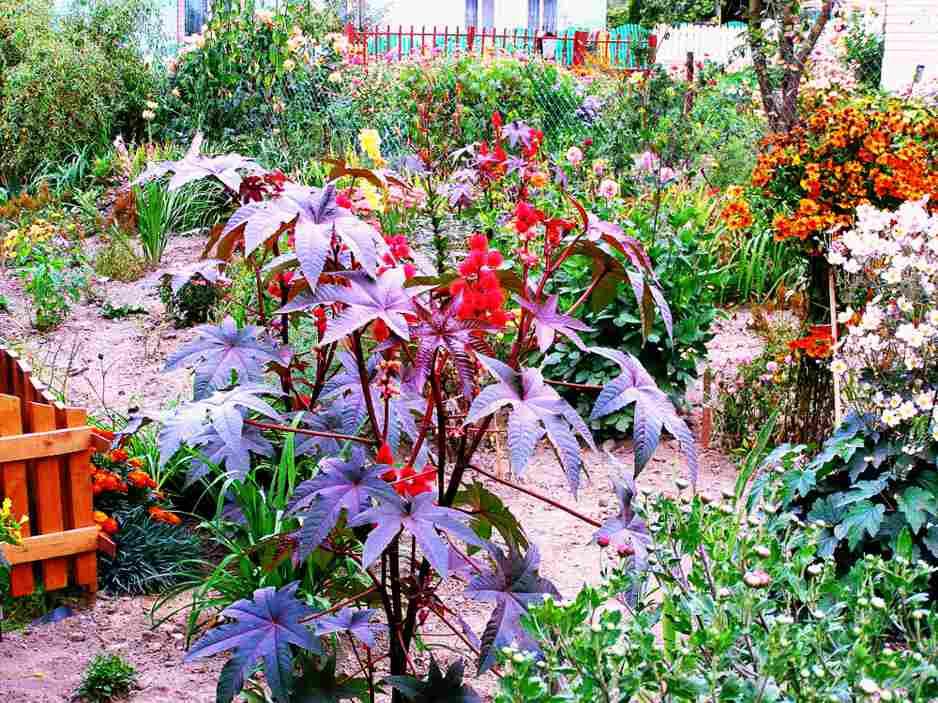 Цветы сажающие под осень