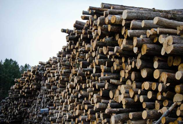 Justices back forestry officials in tax fight with timber company
