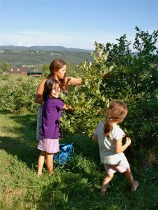 A family picks blueberry