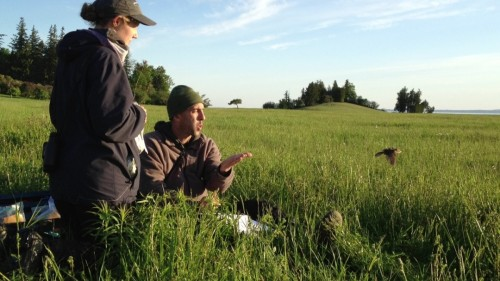 Researcher Noah Perlut, right, and an assistant release a bobolink at Shelburne Farms after equipping the little bird with a light-sensing device that -- if the bird is recaptured next year -- will allow scientists to map the bobolink's migration to Argentina and back. Photo by Candace Page