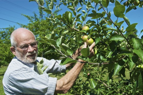 Ray Allen shows off some of the apples at his 53-acre orchard in South Hero. Photo by Dirk Van Susteren