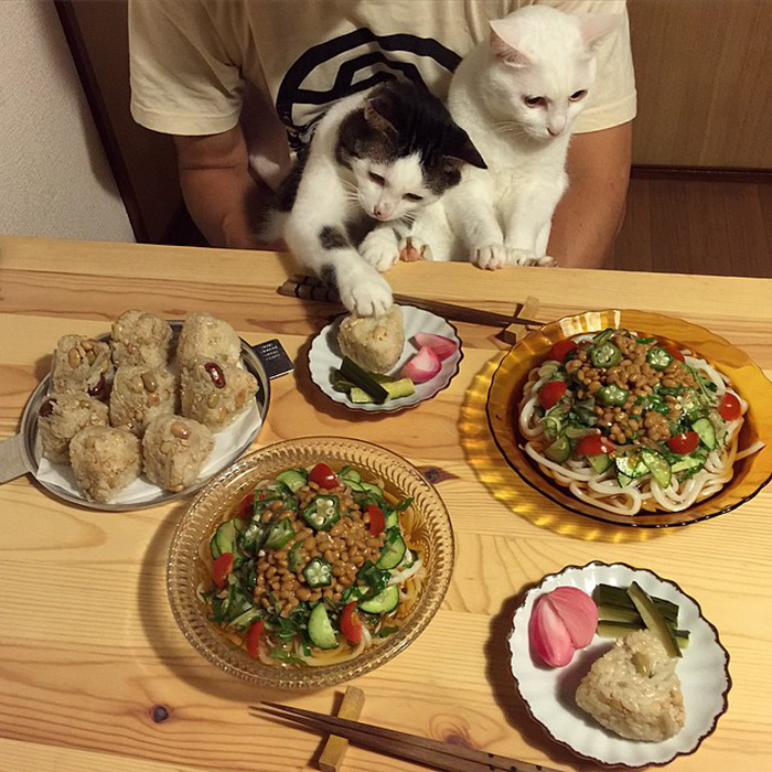 Pizza Wallpaper Cute Funny Pictures Of Cats Watching Their Owners Eat Vuing Com