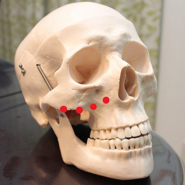 ligament-bone