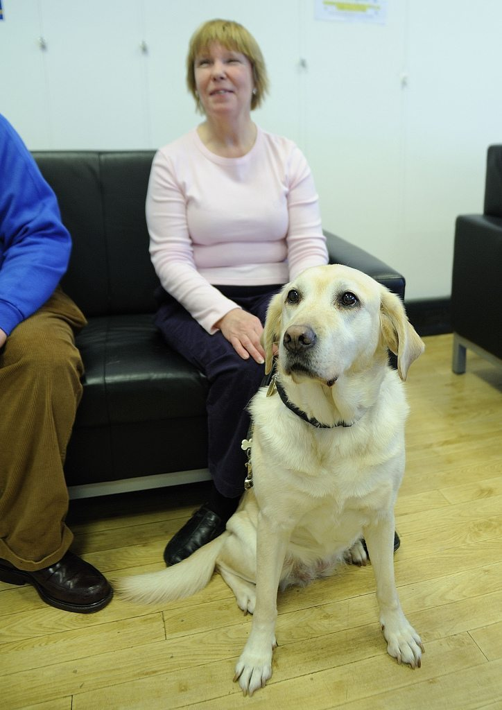 Guide Dog For Blind People