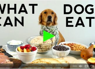 table scraps for dogs, what can dogs eat