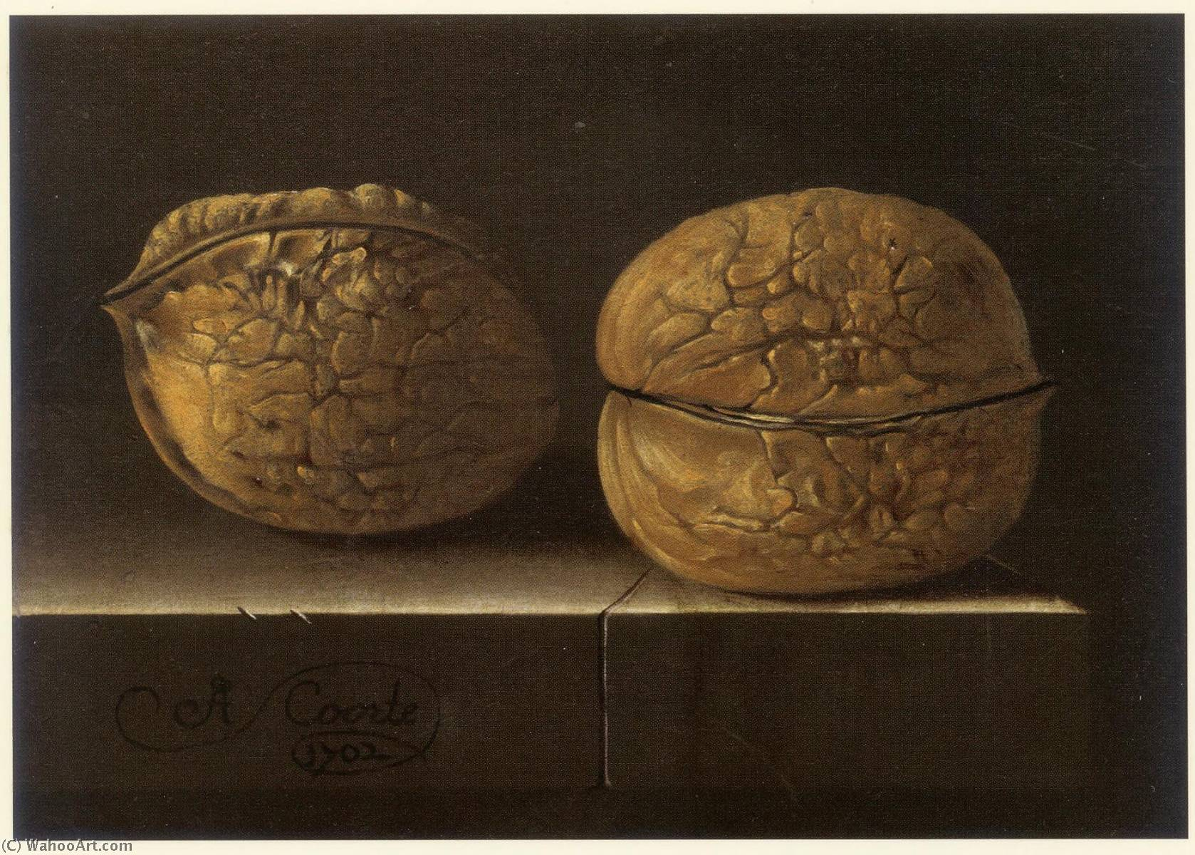 English Two Walnuts 1702 By After Adriaen Coorte 1665 1707 Reproductions After Adriaen Coorte