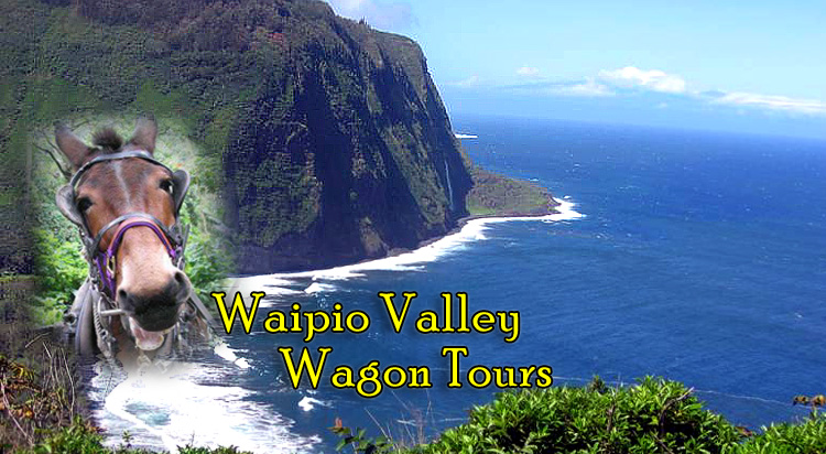 Valley Tours Waipio Valley Wagon Tours Of Hawaii