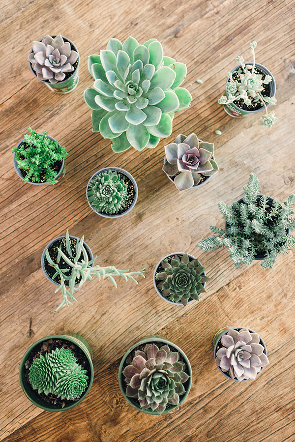 succulent arrangements