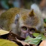 Singapore's Top 5 Outdoor & Wildlife Experiences
