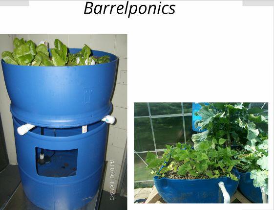 Barrelponics