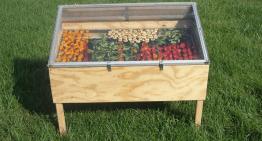 Food Dehydration 101 – DiY Food Storage