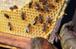 32+ Free Beekeeping Resources