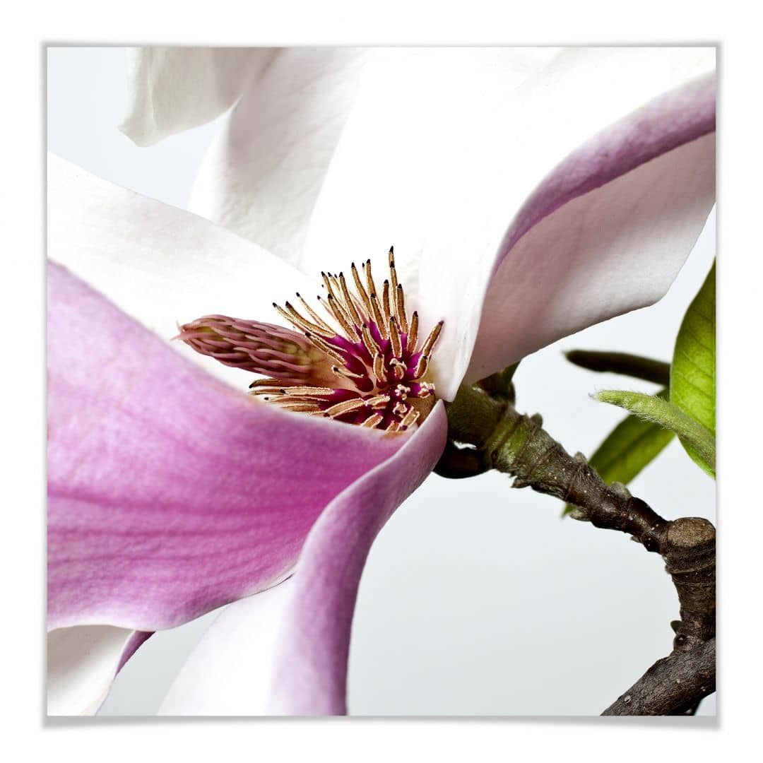 Poster 30x30 Poster Magnolia Wall Art It