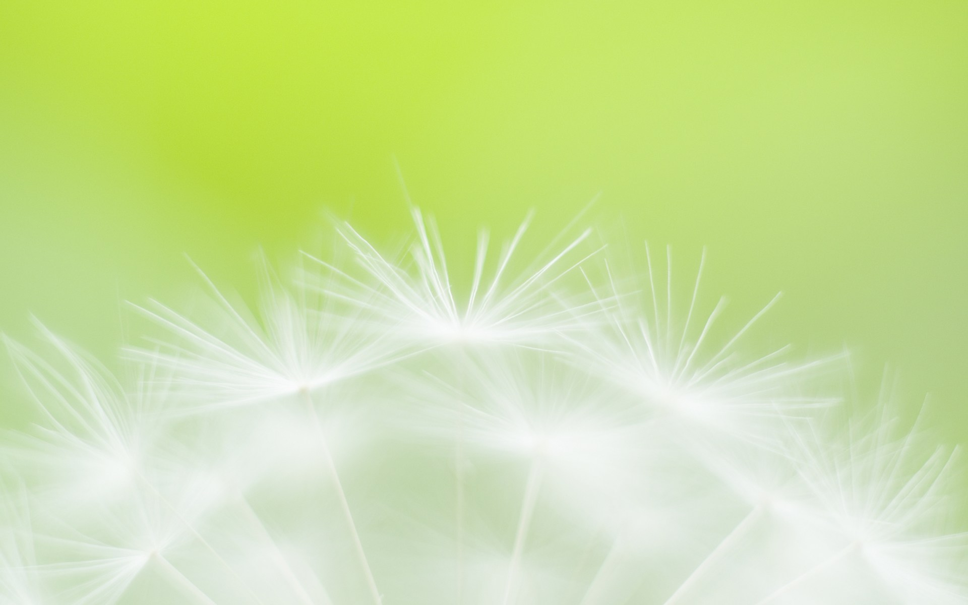 Light Effect Hd Wallpaper Green Flower Soft Focus Photography Wallpaper 3618
