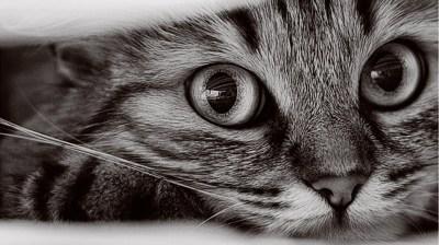 1366x768 Cat Wallpapers #10543 Wallpaper | WallDiskPaper