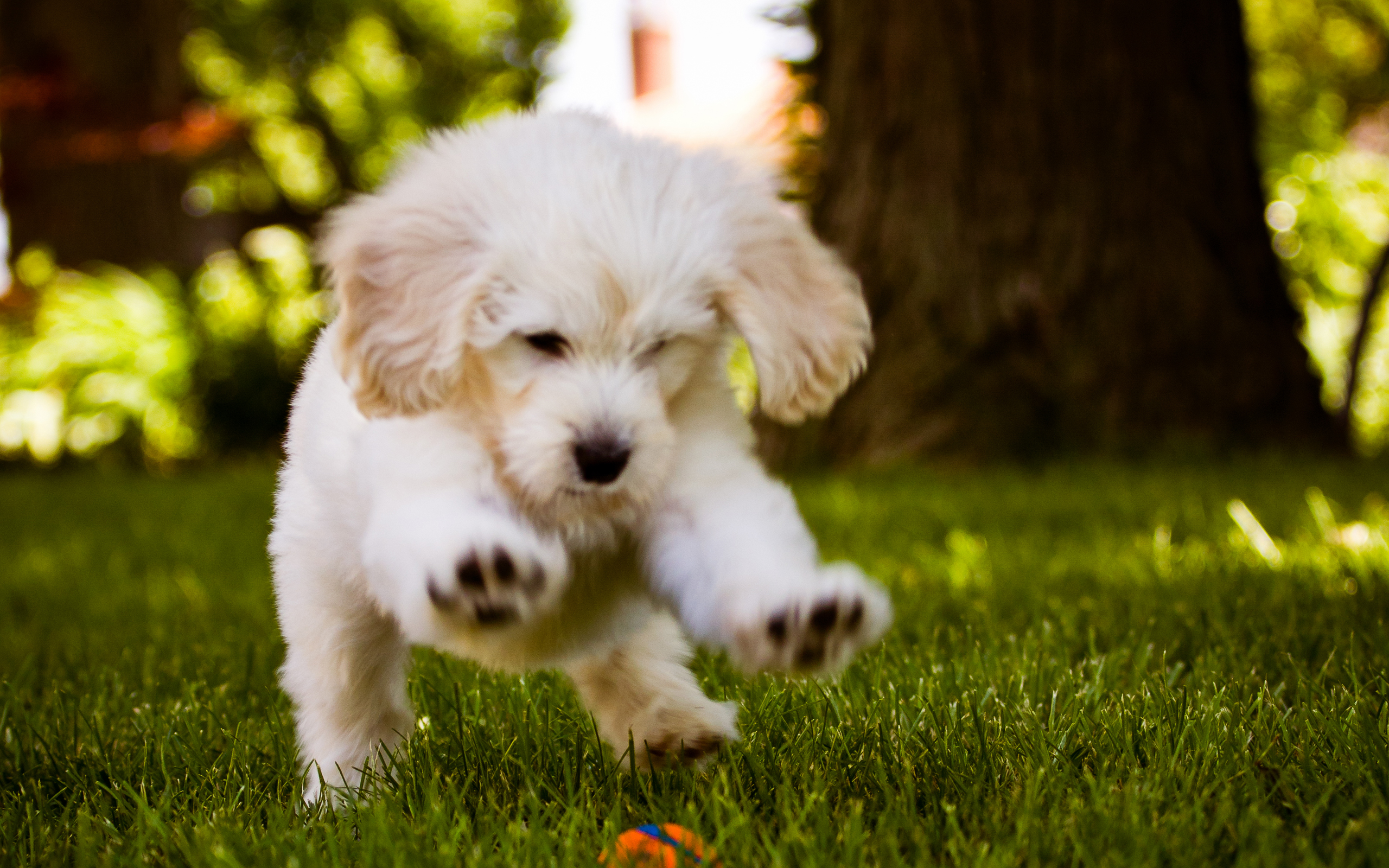 Cute Puppies Wallpapers With Quotes Dog Wallpaper Running Ball 10473 Wallpaper Walldiskpaper