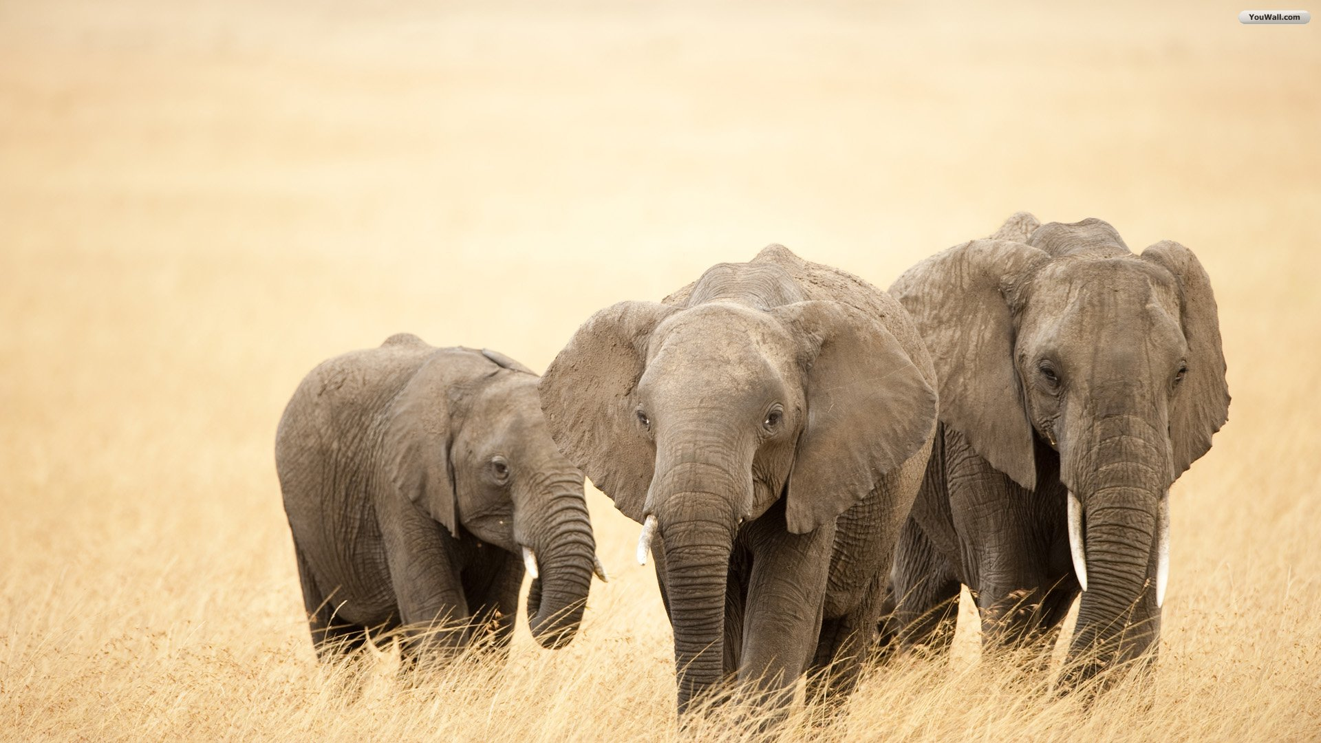 Cute Love Hd Wallpapers For Mobile Phones Elephant Wallpaper Android Phones 10955 Wallpaper