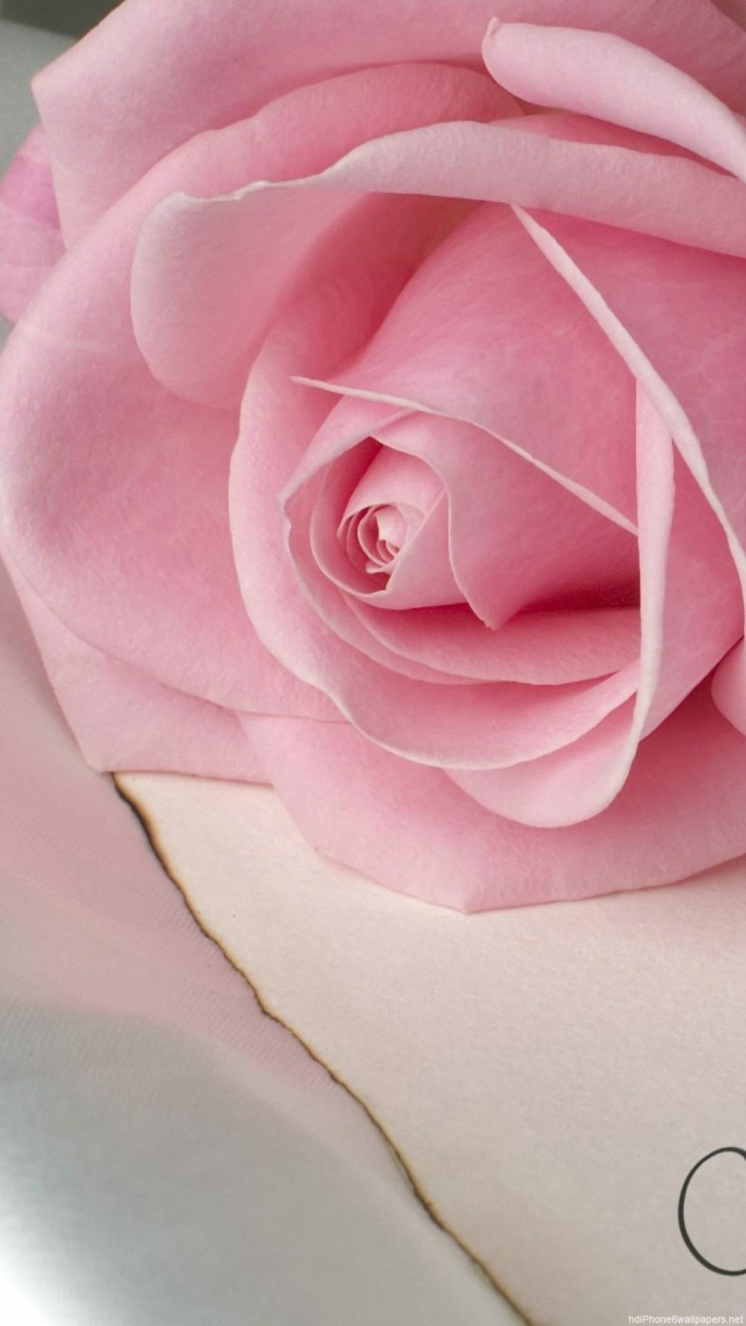Pink Flower Wallpapers With Quotes Rose Wallpapers Iphone Group 73
