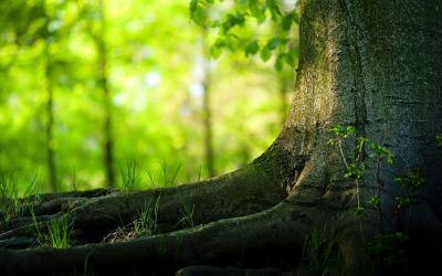HD Wallpapers 1080p Widescreen Nature Free Download for Desktop ...