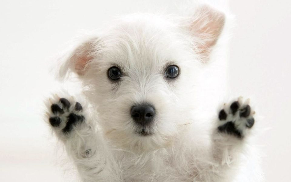 Cute Puppy Wallpapers Group 79