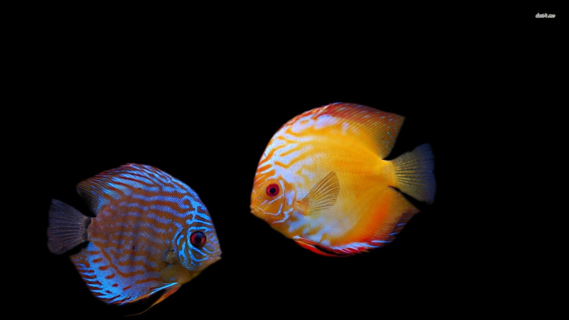 Tropical Ocean 3d Live Wallpaper Free Tropical Fish Wallpapers Group 77