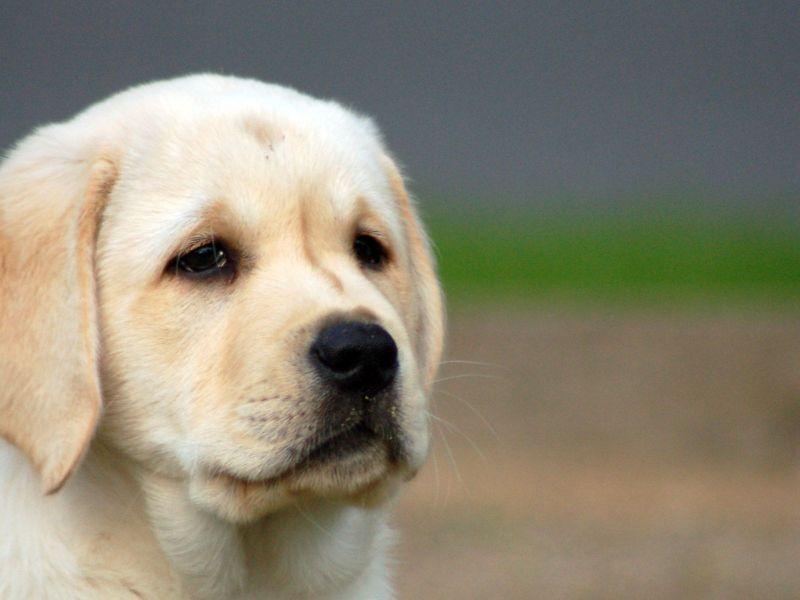 Large Of Sad Puppy Gif