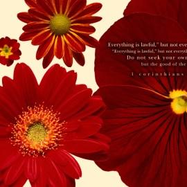 1 Corinthians 10:23-24 Wallpaper