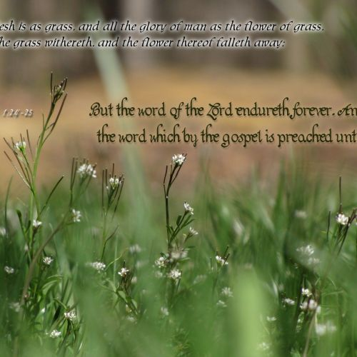 1 Peter 1:24-25 christian wallpaper free download. Use on PC, Mac, Android, iPhone or any device you like.
