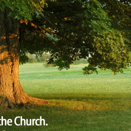 Be the church – The tree Wallpaper