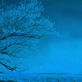 Blue tree Wallpaper