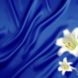 blue7 Wallpaper
