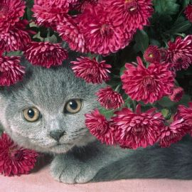 Cat and Flower Wallpaper