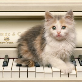 Cat on piano Wallpaper