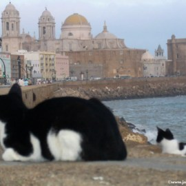 Cats on Cadiz Wallpaper