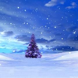 Christmas – Tree Alone Wallpaper