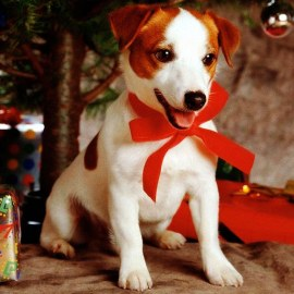 Christmas Gift – Dog Wallpaper