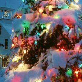 Christmas Tree – Beautiful Lights Wallpaper