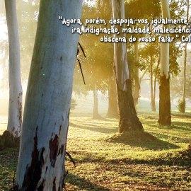 Colossians 3:8 Wallpaper