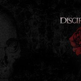 Discilpe rose Wallpaper