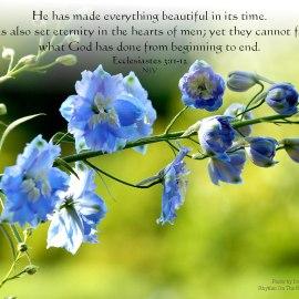 Ecclesiastes 3:11-12 Wallpaper