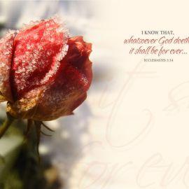 Ecclesiastes 3:14 Wallpaper