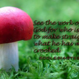 Ecclesiastes 7:13 Wallpaper