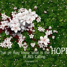 Ephesians 1:15 Wallpaper