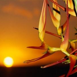 Flower & Sun Wallpaper