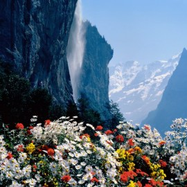 Flowers and Waterfall Wallpaper