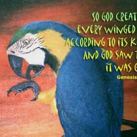 Genesis 1:21 Wallpaper