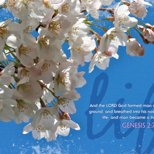 Genesis 2:7 christian wallpaper free download. Use on PC, Mac, Android, iPhone or any device you like.